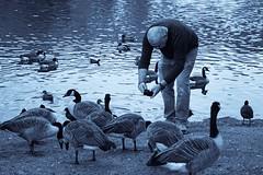 Humans and Birds (tanyalinskey) Tags: lake water ducks waterfowl bird birds geese skyline man humansandbirds flickrfriday