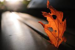 (Ir3nicus) Tags: ausen blatt herbst nahaufnahme sonne verwelkt outdoor leaf autumn closeup sun bank bench withered natur nature nikon d700 dslr fx fullframe nikkor35mm128ai