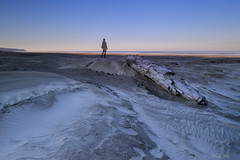 (Masako Metz) Tags: beach sand ocean water sea driftwood me good nice weather oregon coast pacific northwest usa nature landscape seascape places pattern