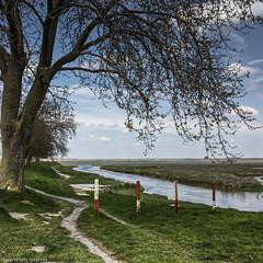 Dans la Baie de Somme (Lucille-bs) Tags: europe france hautsdefrance picardie somme stvalérysursomme 500x500 arbre mer paysage