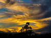 Tonight's the Night (oybay©) Tags: arizona sunset monsoon cloudy clouds saguaro cactus silhouette color colors nature natural orange yellow red purple outdoor sky dusk cloud city