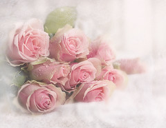 Romantic (BirgittaSjostedt) Tags: rose blossom garden plant bouquet lace texture soft drop droplet texturaltuesday