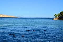 Waiting For The Sun [Lopar - 27 August 2018] (Doc. Ing.) Tags: 2018 rab croatia otokrab rabisland happyisland kvarner kvarnergulf summer mediterraneansea adriatic lopar landscape nikond5100