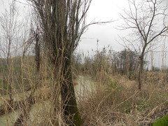 DSCN0048 (Gianluigi Roda / Photographer) Tags: springtime april 2013 creek creeks lavinocreek rainydays springrains