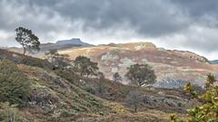 Lakeland (Brian Negus) Tags: landscape tree lakedistrict cukbria hillside cloud cumbria fell lakeland