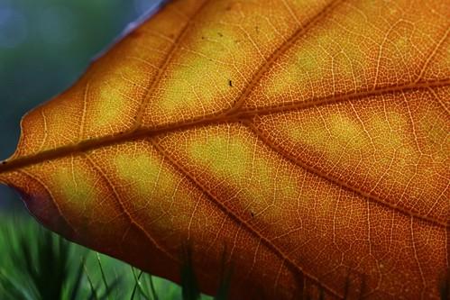 Delightful autumn