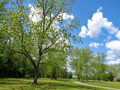 Nature Trail And Trees. (dccradio) Tags: lumberton nc northcarolina robesoncounty outdoor outside outdoors northeastpark penningtonathleticcomplex drraymondbpenningtonathleticcomplex sky bluesky tree trees greenery foliage spring springtime april saturday afternoon goodafternoon nature natural leaf leaves branch treebranch treebranches branches treelimb treelimbs grass lawn yard ground cloud clouds whitecloud whiteclouds path walkingpath walkingtrail trail paved pavement sidewalk