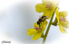 Plano (victoria@) Tags: naturaleza nature macro macrophoto macrofotografia nikond5100