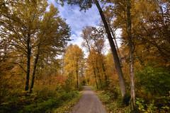 Sentier du parc (gaudreaultnormand) Tags: automne couleur jaune lumière orange parcdelarivièredumoulin quebec saguenay vert arbre bois forêt ciel sentier parc