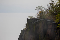 7K8A8111 (rpealit) Tags: scenery wildlife nature state line lookout peregrine falcon bird