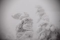 Juhyo (Elios.k) Tags: horizontal outdoors nopeople trees coveredinsnow juhyo snowmonster fir forest sky white ice hoarfrost frozen harshenvironment freezing cold zaosanchostation zaoropeway zaoskiresort snow winter weather mountain dof depthoffield foregroundblur backgroundblur colour color travel travelling vacation december 2017 canon 5dmkii camera photography zao mountainzao mtzao zaoonsen zaōonsen mountzao skiresort yamagataprefecture tōhokuregion tohoku honsu asia japan