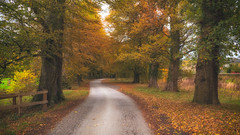 This is Autumn... (Lee Harris Photography) Tags: landscape autumn trees leaves orange gold colours colourful lane road track yorkshire walking beautiful lumixg9 m43 outdoor uk contrast lens light october