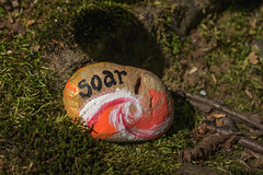 (Theresa Best) Tags: rock paint painted nature found paintedrocks baraboorocks soar art canon canon760d canont6s canon8000d theresabest explorecreatewonder northwoods wisconsin