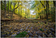 OCTOBER 2018 NGM_9156_5797-1-222 (Nick and Karen Munroe) Tags: moss green heartlakeconservationarea heartlakeconservation heartlakepark heartlake conservationarea conservation golden goldensky goldenhour goldensunset goldenlight gold forest tree trees woods hike trail hiking forests wood natural fall autumn fallsplendor fallcolours karenick23 karenick karenandnickmunroe karenandnick munroe karenmunroe karen landscape ontario outdoors brampton bramptonontario ontariocanada nikon nickandkaren nickandkarenmunroe nature canada nick d750 nikond750 munroedesigns photography munroephotoghrpahy nickmunroe munroedesignsphotography munroephotography munroenick landscapes beauty brilliant nikon1424f28 1424 1424f28 nikon1424 nikonf28 f28 colour colours color colors