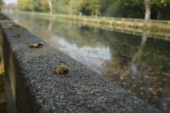_DSC0377 (marco santagostino) Tags: natura nature pavia leaves foglie erba grass verde green rosso red orange arancione sonya7ii samyang samyangfe35mmf28af 35mm