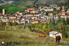 Due cavalli (Gianni Armano) Tags: due cavalli varzi pavia lombardia italia foto gianni armano photo flickr