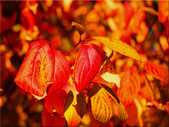 Fall foliage colors (Ostseetroll) Tags: deu deutschland eutin eutinerschlosspark geo:lat=5414089829 geo:lon=1061951513 geotagged schleswigholstein herbst fall foliage colors autumn olympus em5markii laub farben blätter
