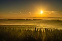 forest series #161 (Stefan A. Schmidt) Tags: forest germany sunbeam sunbeams wood trees landscape golden pentaxart smcpentaxfa43mmf19limited fog mist dust sauerland