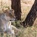 Safari Flickr (121 of 266)