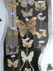 20180ttArthropoda-Calci (60) (Naturalmentescienza) Tags: artropodi insetti coleotteri farfalle fasmidi ragni