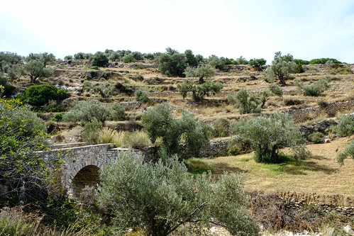 Babylonian olive trees and bridge