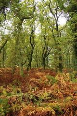 in the woods (kokoschka's doll) Tags: trees woods bracken autumn downs wiltshire