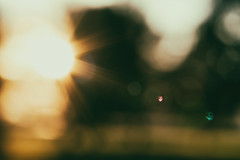 soak it up (Sarah Rausch) Tags: bokeh sunset warmth flare warm outoffocus sony