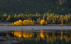 Early Morning Boat Trip (Nancy King Photography) Tags: trees landscape aspens reflection mountains sunrise water lake fall colorado twinlakes
