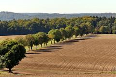 ...der Herbst kommt auch nach Neudorf (zikade) Tags: neudorf feld acker bäume allee amorbach odenwald schatten erde braun landwirtschaft