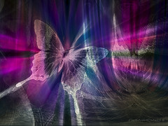 Butterfly in neon (CaBAsk ♥Thank U for visiting ♥) Tags: abstract art surreal olympus butterfly photoshop digital manipulation neon heart love bright city napkin dark light expression imagination fantasy curtains ter