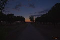 Bajando el telón al dia... (cienfuegos84) Tags: atardecer sunset sol sun cielo sky nubes nube cloud clouds arboles trees