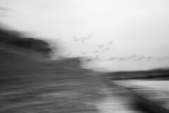 Migration - 48/100 X (mfhiatt) Tags: img97140118jpg blur urbanblur oof outoffocus icm intentionalcameramovement blackandwhite desmoines iowa 100xthe2018edition 100x2018 image48100 birds