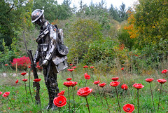 World War I Centenary Display (Late Breaks Devon) Tags: world war i centenary display rosemoor gardens unknown soldier george hiders renee kilburns poppies make up thought provoking installation support royal british legion rhs garden