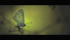 13 octobre (vincenadmath) Tags: papillon automne 13 octobre vincenadmath macro canon 100mm nature ambiance