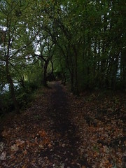 Wooded waterside walk (Phil Gayton) Tags: track trail path water tree fall autumn riverside walk river dart totnes devon uk