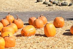 DSC_2555 (earthdog) Tags: 2018 needstags needstitle nikon d5600 nikond5600 18300mmf3563 fall autumn pumpkinpatch spinafarms farm
