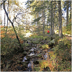 tros marets 90 (beauty of all things) Tags: belgien belgium malmedy trôsmarettal quadratisch autumn herbst bach creek