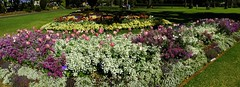 Flowers in Queens Park, Toowoomba during Carnival of Flowers 2018 (Aussie~mobs) Tags: carnivalofflowers toowoomba queensland australia pretty flowers colourful festival queenspark 2018 garden tulip