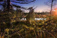 Am Hochmoor von Kaltenbronn (MHikeBike) Tags: wald berge wasser bäume schwarzwald nordschwarzwald murg murgtal wandern wege ruhe berg weg hochmoor kaltenbronn gernsbach urwald