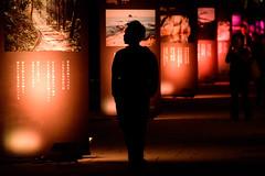 山口ゆめ花博-19市町の花通り #2ーYamaguchi Yume Flo (kurumaebi) Tags: yamaguchi 阿知須 山口市 nikon d750 山口ゆめ花博 夜 night yamaguchiyumeflowerexpo