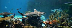 National Aquarium Panorama (michael_orr25) Tags: nationalaquarium nikond7500 sealife baltimore maryland
