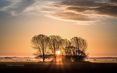 Ancholme Sunrise (Mark Lindstrom) Tags: autumn m43 microfourthirds 40150pro em1mk2 olympus sunray sun copse trees northlincolnshire bonbycarrs rural valley vale ancholme mist sunrise