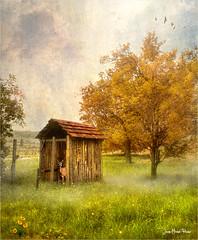Hideout (Jean-Michel Priaux) Tags: paysage nature hut shack hideout priaux tree season house shelter roe garden meatow pasture hdr nikon autumn haven art impressionist