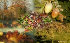 COLOR DE OTOÑO (Angelines3) Tags: collage colores otoño hojas frutos árboles edificios