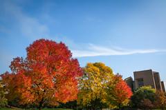 Green Bay Fall Colors-3