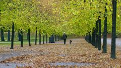 Höst i Drottningholm (tonyguest) Tags: drottningholm autumn höst fall trees leaves man dog stockholm sverige sweden tonyguest lovö lovön drottningholmsparken park slott palace