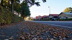 Street in fall (Steenjep) Tags: herning street gade jylland denmark hcørstedsvej fortov blad løv leaf house hjem hus home autumn fall efterår