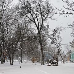 94665526 (aniaerm) Tags: snow ice frost