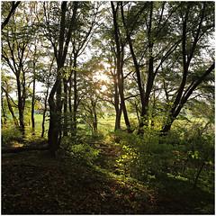 im korkus 267 (beauty of all things) Tags: eschweiler imkorkus wald forest urwald jungle quadratisch intothelight