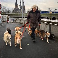 Saved from Instagram (Wiro Oudejans (Wiro.Karen)) Tags: huisdier hond honden amsterdam